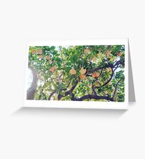 spanish flowers Greeting Card