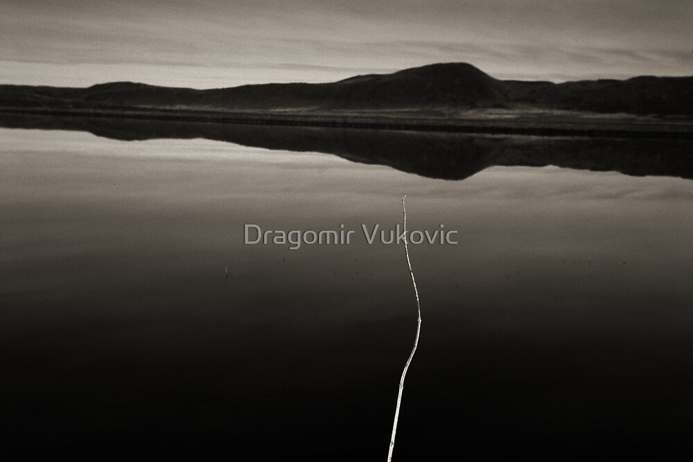Rise Up One by Dragomir Vukovic