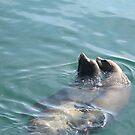 Sea Lion Couple by Snowkitten
