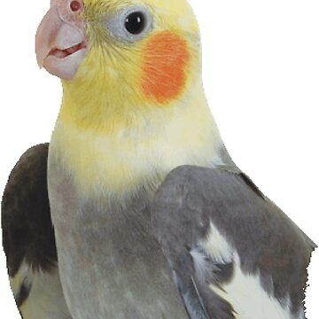 Cockatiel by PharisaicalJesu