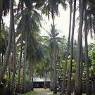 Sekapung,  Subuku Island, Borneo by dougie1
