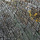 Cracked Wood by Ed Stone