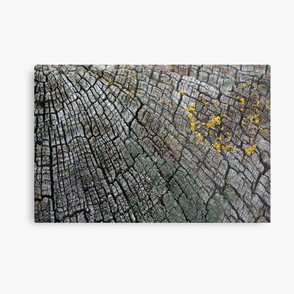 Cracked Wood Metal Print