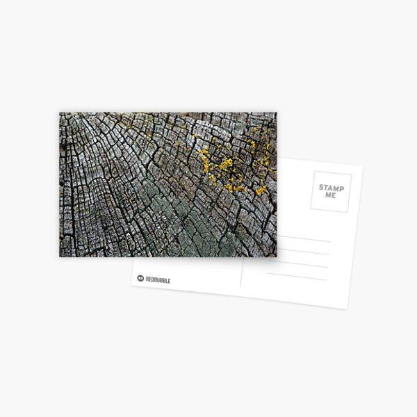 Cracked Wood Postcard