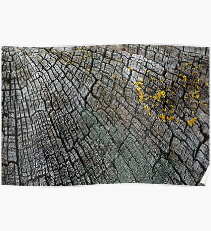 Cracked Wood Poster