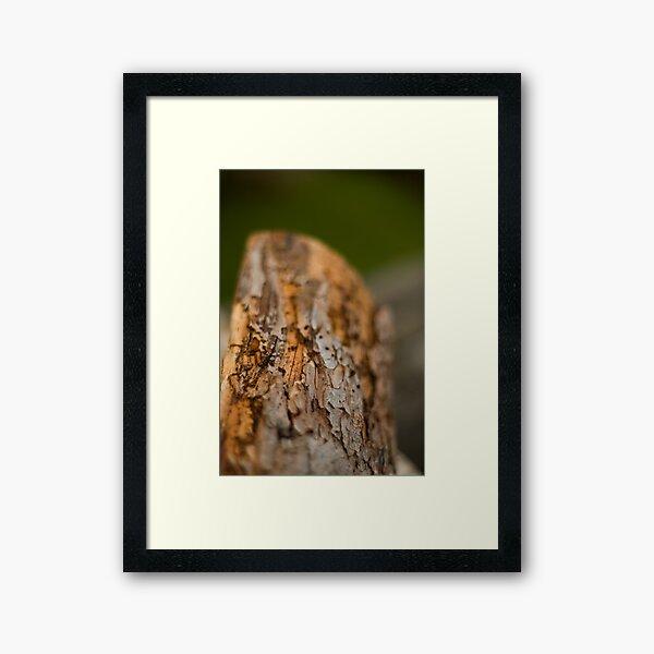Log Framed Art Print