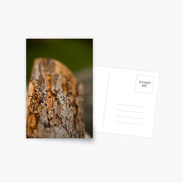 Log Postcard