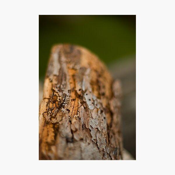 Log Photographic Print
