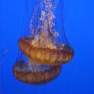 Jelly Fish by Snowkitten