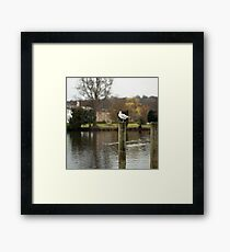 Henley Gull Framed Print