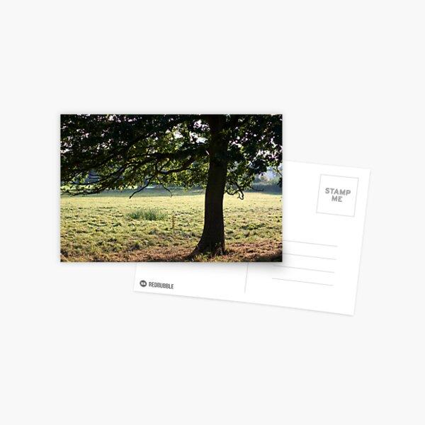 Cow Tree Postcard
