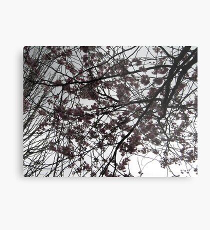 Cherry Blossoms on a Dublin Sky Metal Print