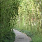 Bamboo Pathway by Snowkitten