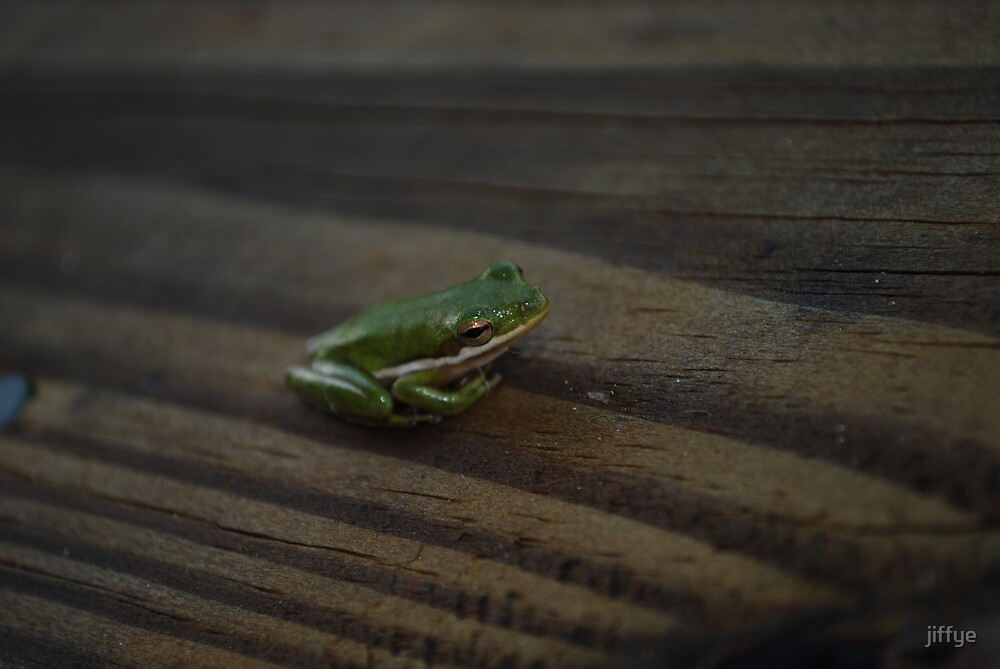 LITTLE FROG by jiffye