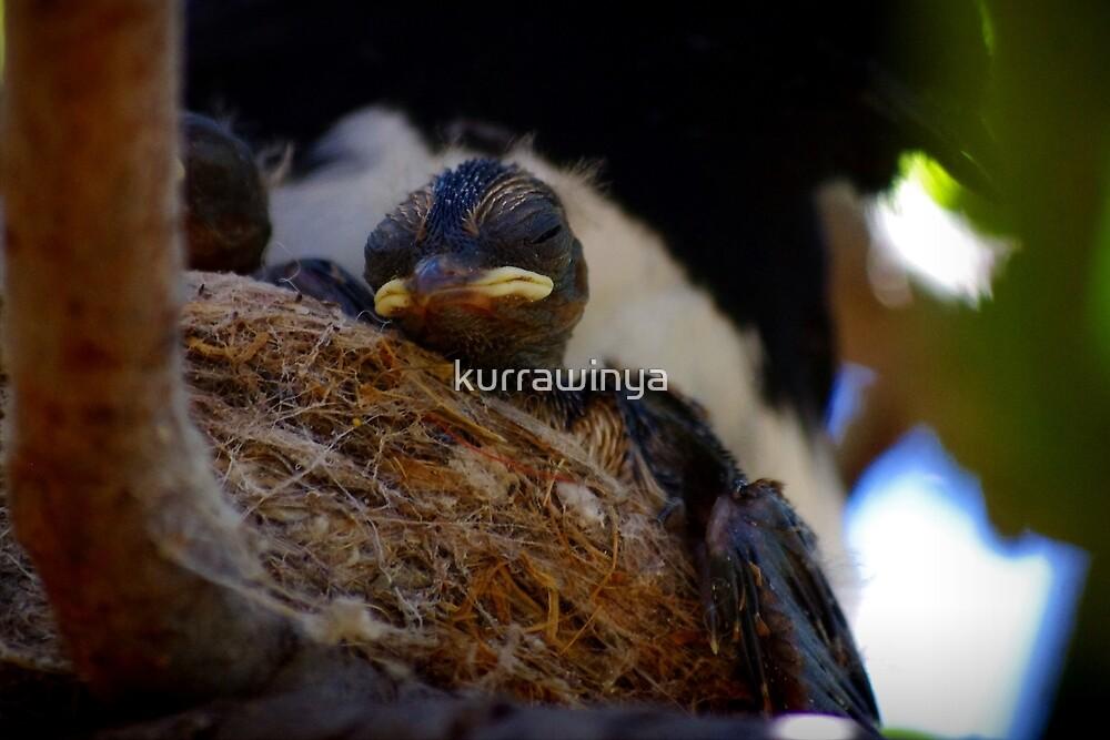 Beauty sleep by Penny Kittel