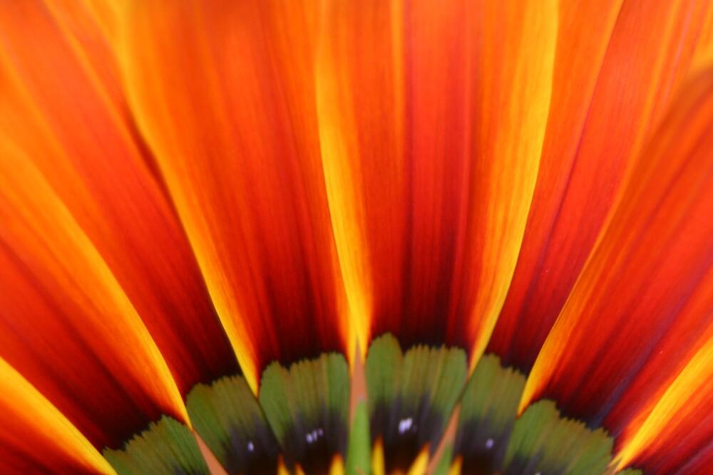 Orange flower by Gudmundur