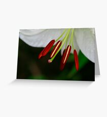 Stamen Beauty Greeting Card