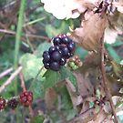 Autumn Crunch  by Gemma27