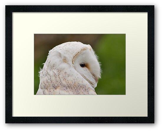 Barn Owl by Jenn Ridley