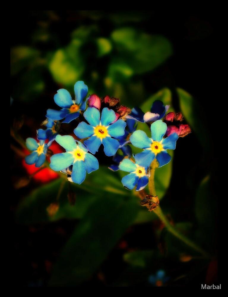 Flowers by Marbal