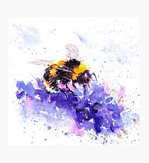 Bee on Lavender, Gift for nature lover, beekeeper Photographic Print