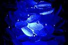 Blue Light by Jeannette Sheehy