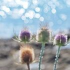 """"""" Sun Blue Thistles """" by Richard Couchman"""