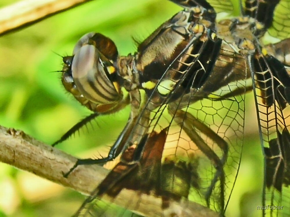 Dragonfly Macro by mwfoster