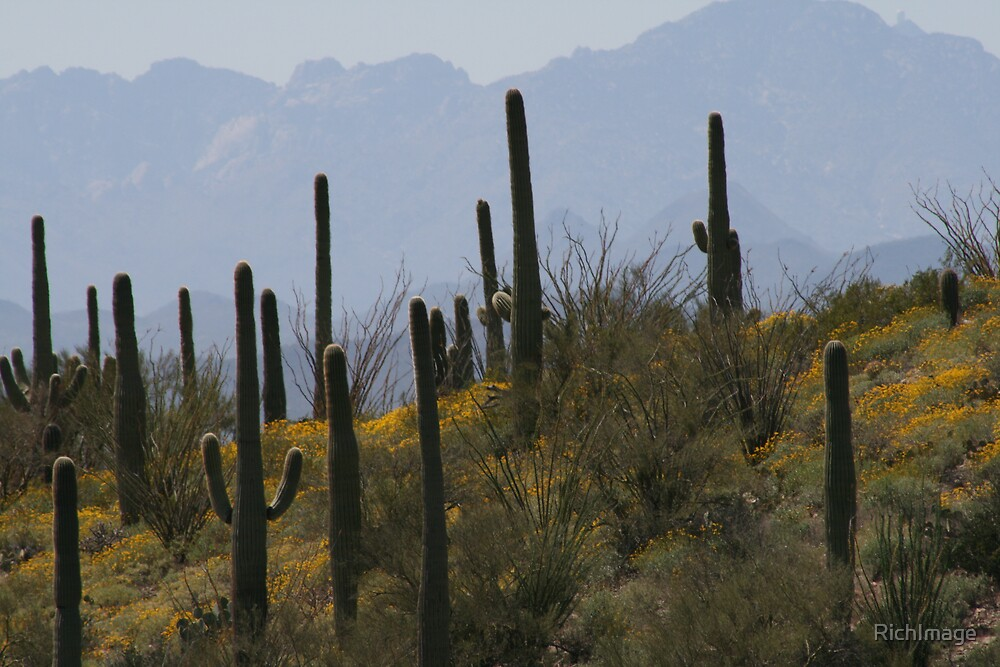 Springtime in the Sonoran Desert by RichImage
