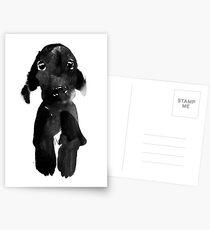 black dog Postcards