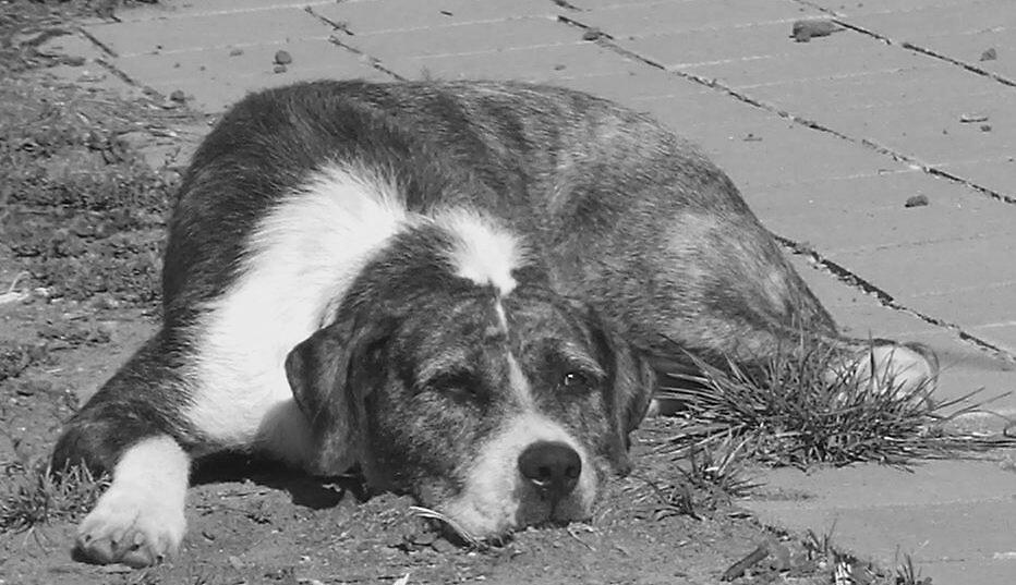 Kenzie my very own Canine Lounge Lizard by frenzied1