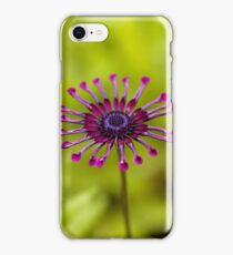 Flower of a trailing African honeysuckle iPhone Case/Skin