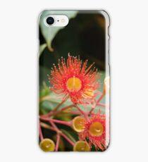 Red flowering gum (Corymbia ficifolia) iPhone Case/Skin