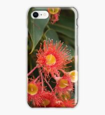 Flowers of a red flowering gum iPhone Case/Skin