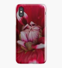 Red and white Dahlia (Dahlia x hortensis) iPhone Case/Skin