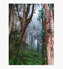 A Whisper in the Woods Photographic Print
