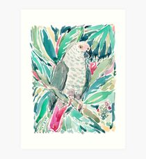 CONGO the African Grey Parrot Art Print