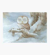 Sleepy Owl Photographic Print