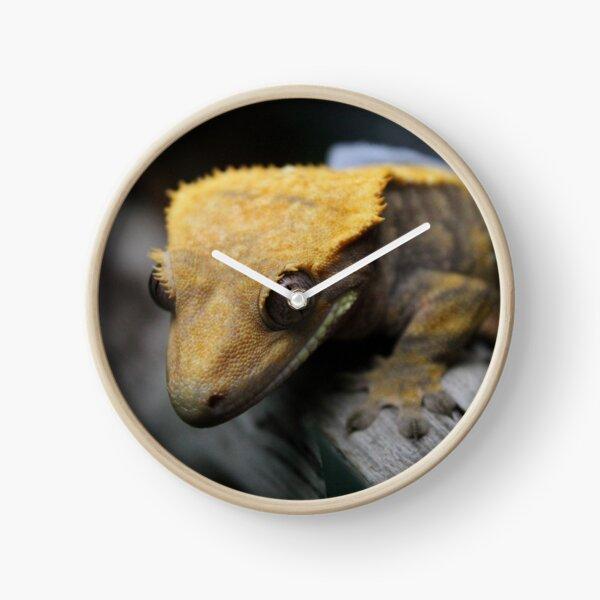 crested gecko Clock