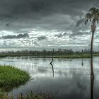 1279 The Swamp by DavidsArt