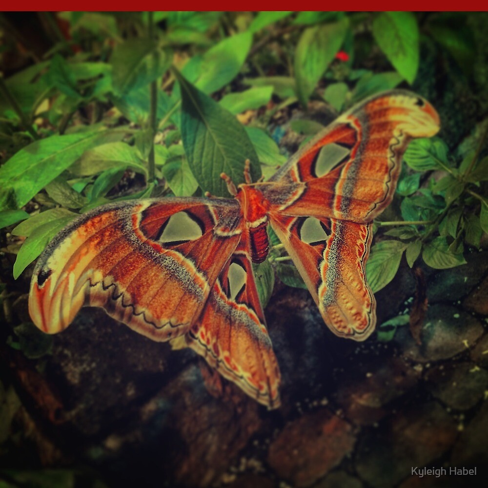 Moth by Kyleigh Habel