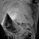 Close up of history by Wild at Heart Namibia