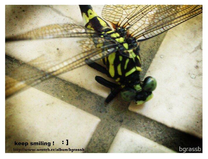 dragonfly 2 by bgrassb