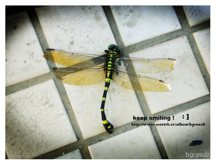 dragonfly 3 by bgrassb