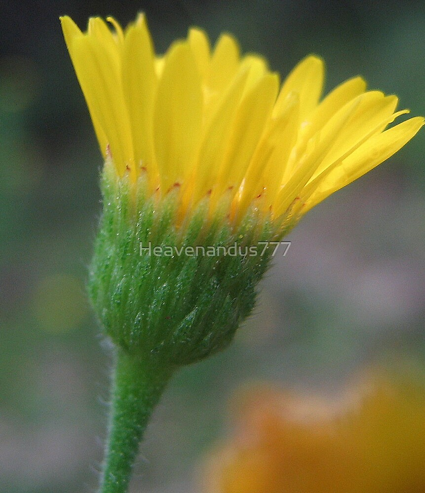 Late Bloomer by Heavenandus777