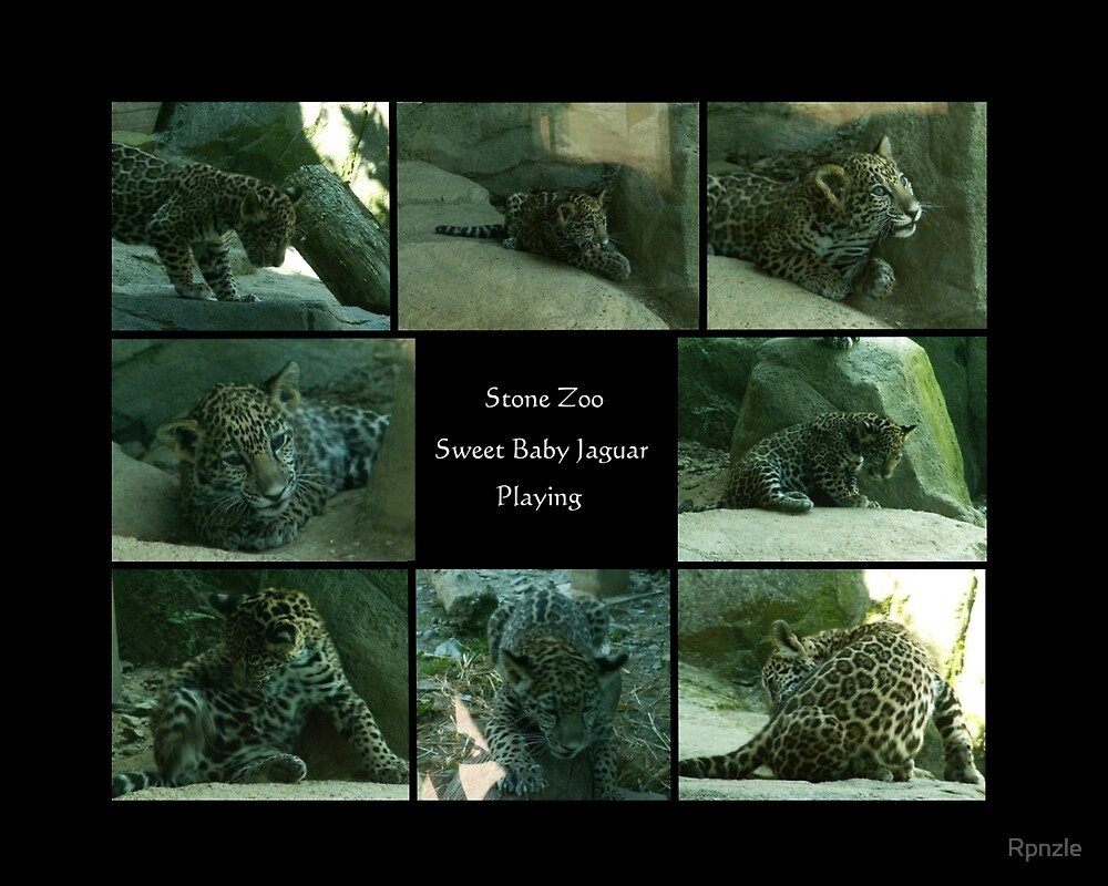 Baby Jaguar by Rpnzle