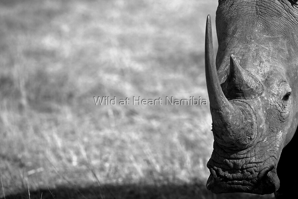 Rhino stare by Wild at Heart Namibia