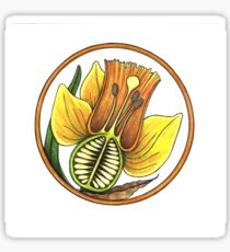DAFFODIL CROSS SECTION Sticker