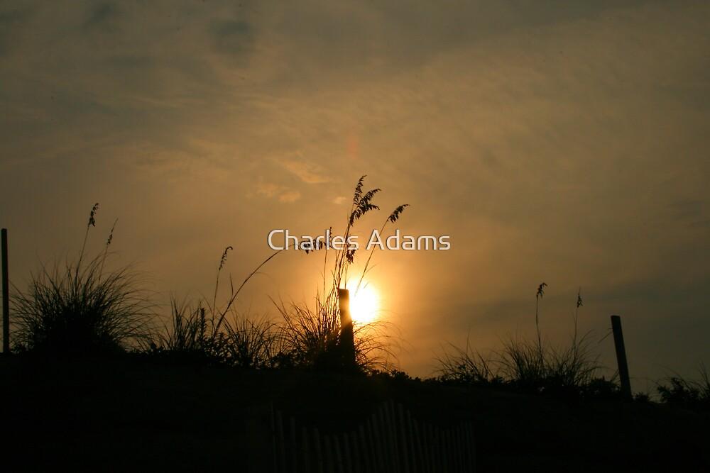 Beach Grass by Charles Adams