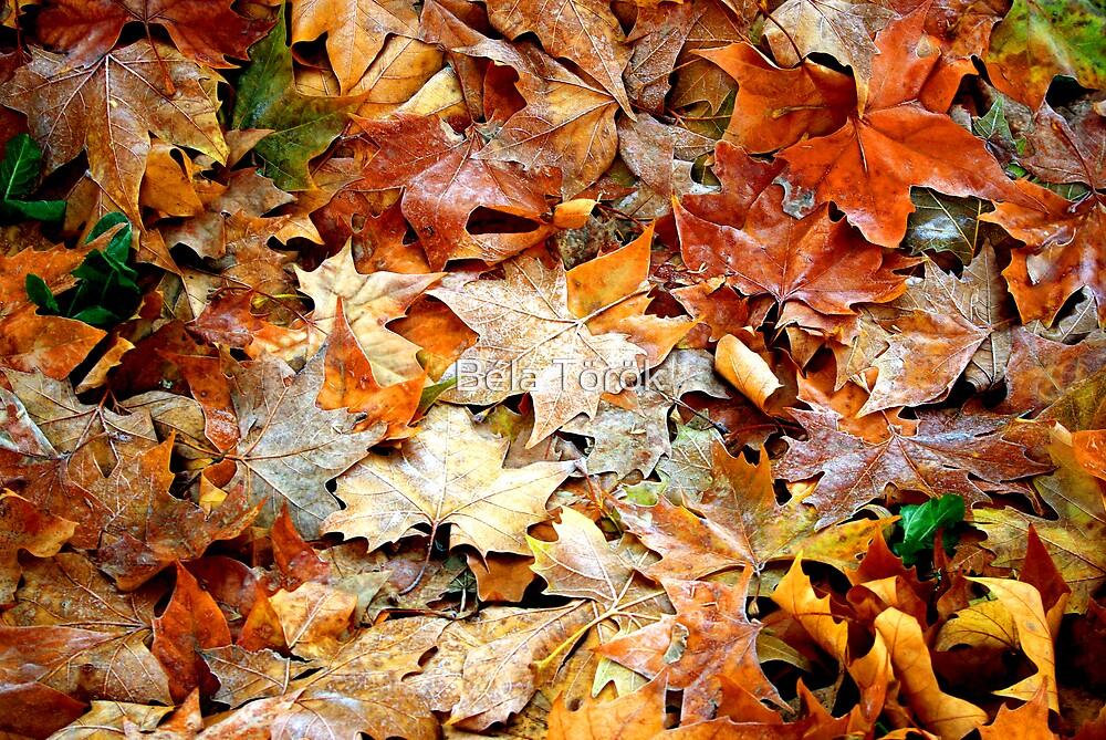 Frozen leaves by Béla Török